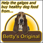Feed galgo dogs