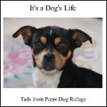 Tails of Pepis Dog Refuge